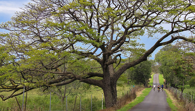 Bike Hawaii Big Island hawaii big island biking